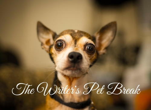 the-writers-pet-break